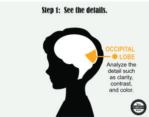 Brain Activation and Coordination 1