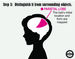 Brain Activation and Coordination 3