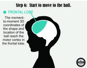 Brain Activation and Coordination 6