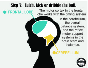 Brain Activation and Coordination 7