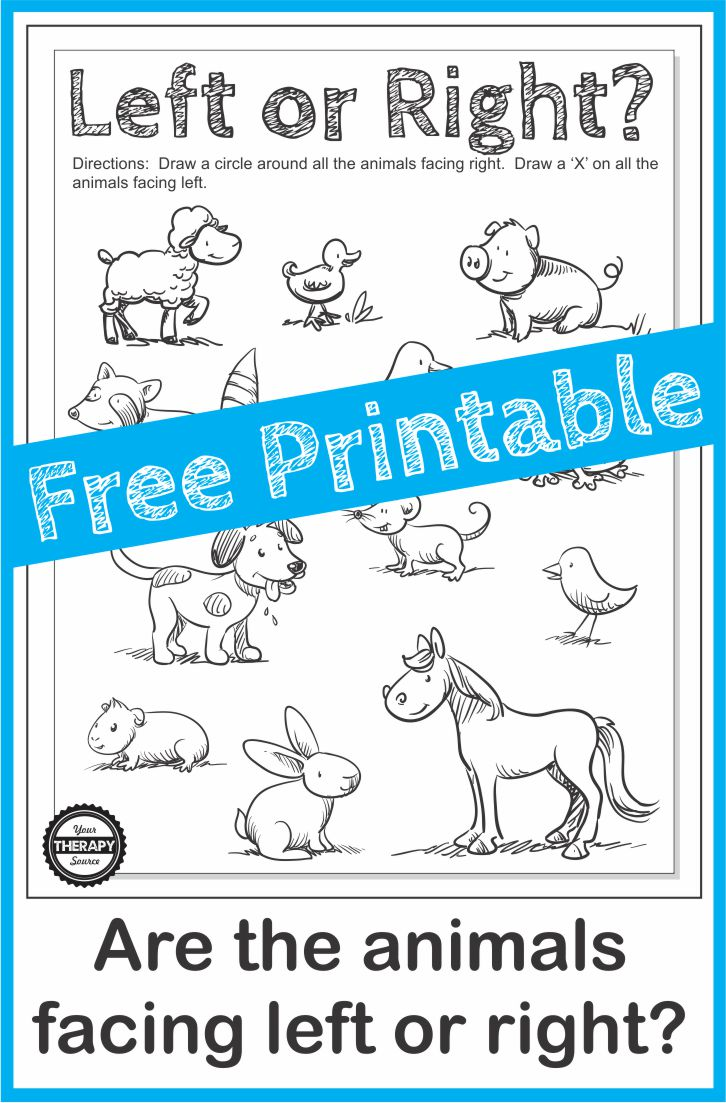 Directionality Worksheet - Which Way is the Animal Facing? - Your ...